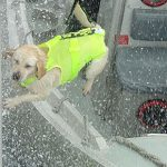 S.O.S.-Dog-Harness-Hi-Visibility-for-Customs