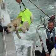 3-SOS-Marine-Dog-Harness-boarding-vessel