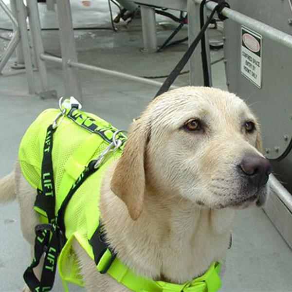 4-SOS-Marine-Dog-Harness